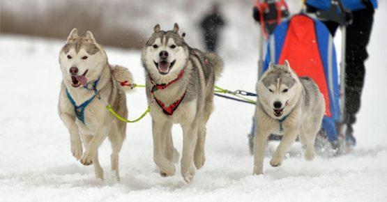 Meribel Activities Dog Sledding