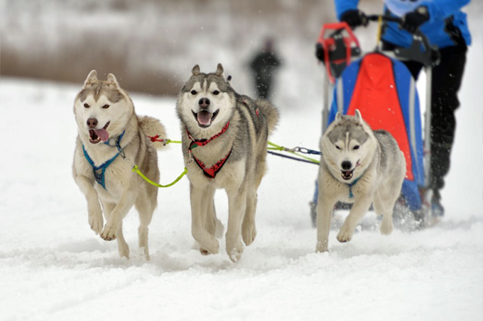 Meribel Activities Dog Sledding